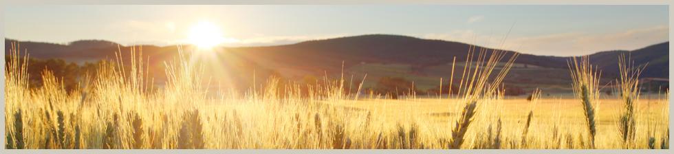banner_landwirtschaft